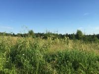 Купить участок в снт. Купить земельный участок 14 сот., Щепино, Дмитровское шоссе 44 от МКАД.