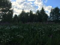 Покупка земельного участка в Подмосковье. Купить земельный участок 13 сот., Ивановское, Дмитровское шоссе 54 от МКАД.