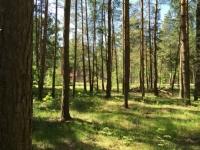 Лесной участок 10 соток д. Копнино ИЖС