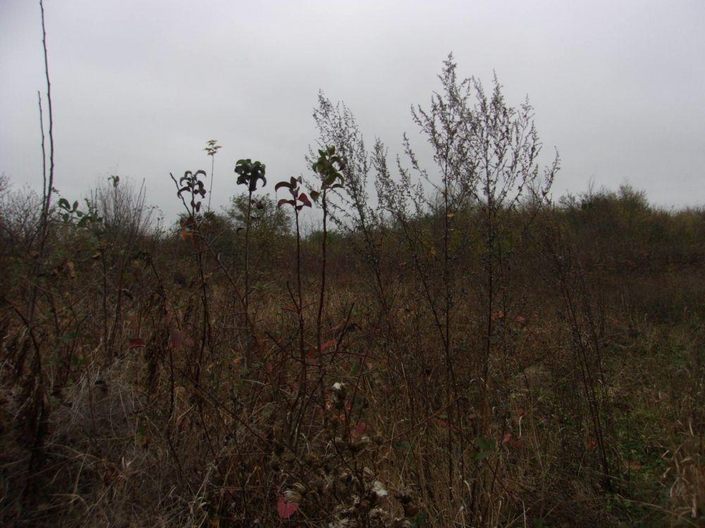 Купить Поселений (ИЖС), Краснодарский край, Ильский, Земельные участки c фото