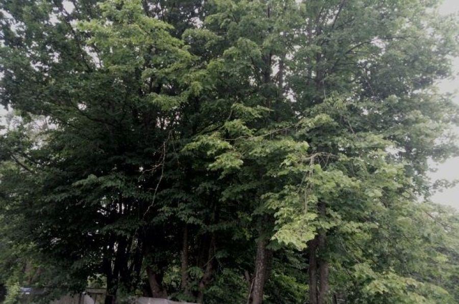 Продажа земельный участок 8 соток ИЖС  Московская область Пушкинский район п.Зеленоградский ул.Центральная д.64, фото 1