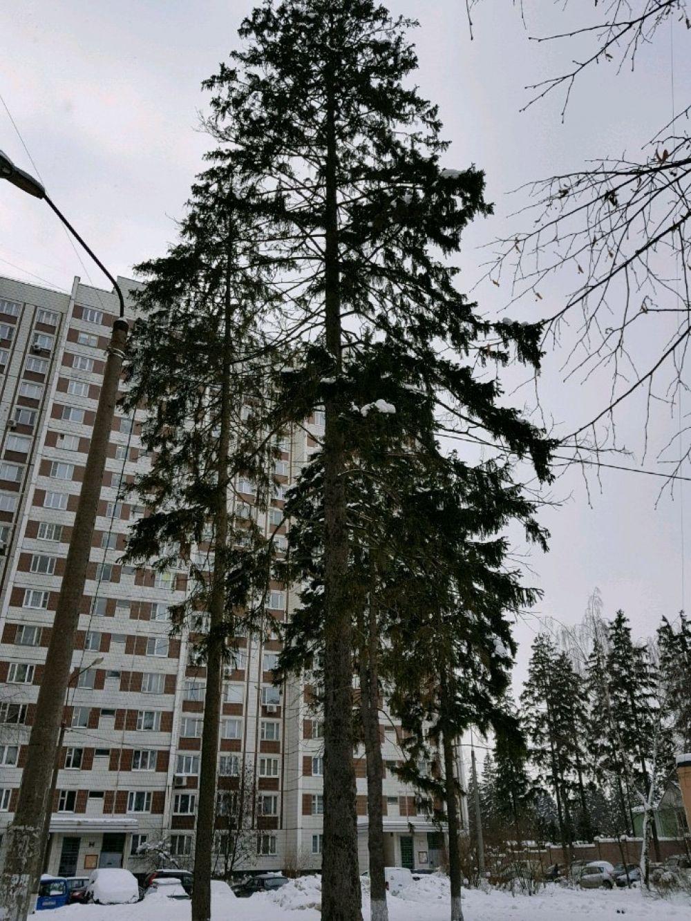Однокомнатная квартира Московская область г.Королев ул.Пушкинская д.3., фото 2