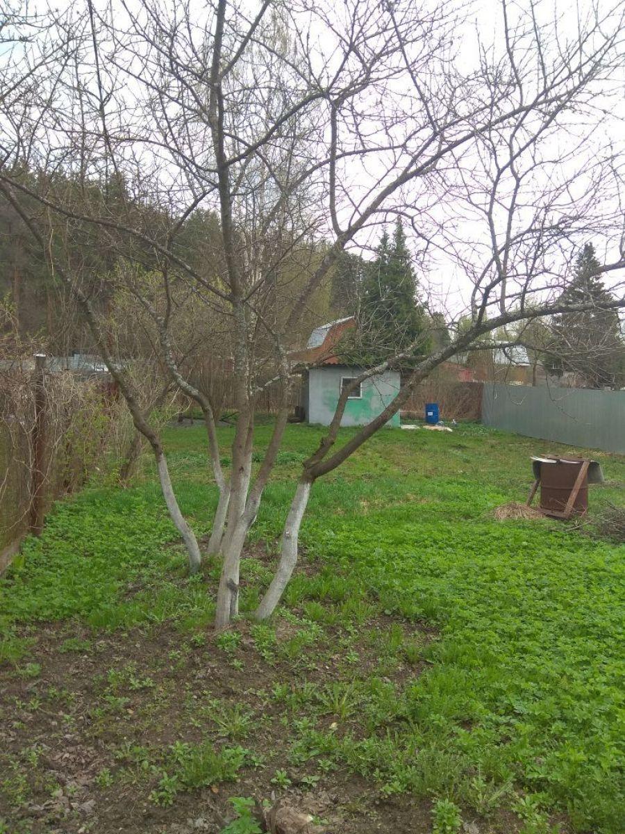 Земельный участок  6 соток  г.Лосино-Петровский СНТ Урожай, фото 4