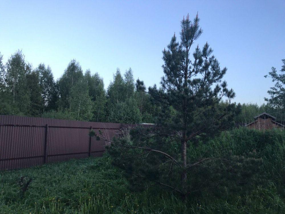 Земельный участок 15 соток с. Трубино ул.Новостройка, фото 3